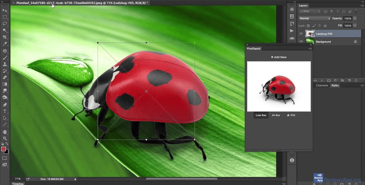 PixelSquid ladybug on the leaf